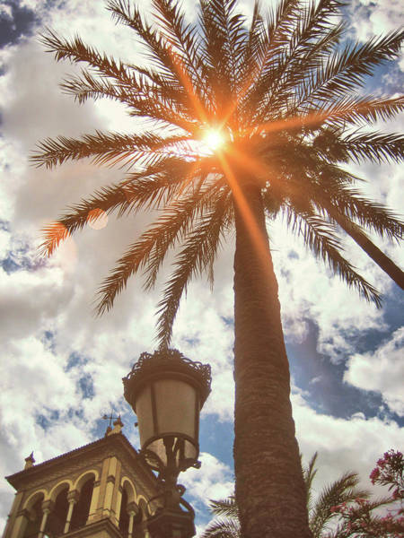 Photograph - Palms Of Spain by JAMART Photography