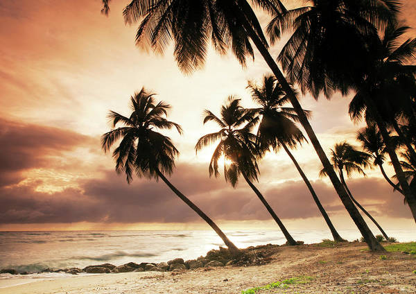 Barbados Photograph - Palms On A Beach At Sunset by Buena Vista Images