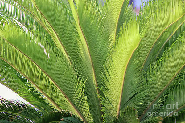 Photograph - Palms Up by Karen Adams