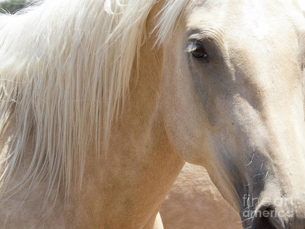 Photograph - Palomino Horse 2 by Christy Garavetto