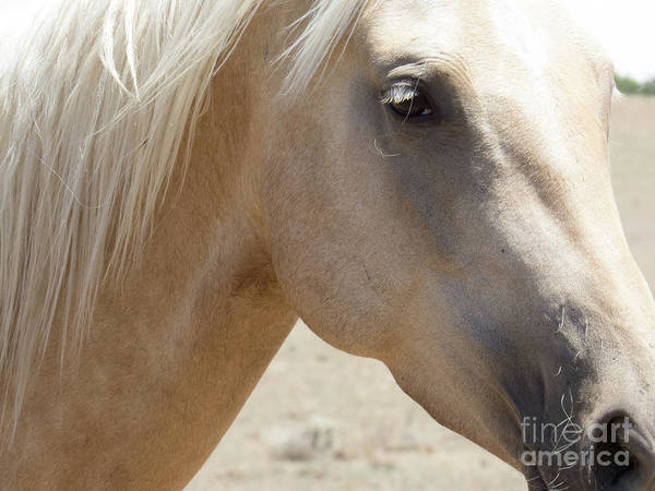 Photograph - Palomino Horse 3 by Christy Garavetto