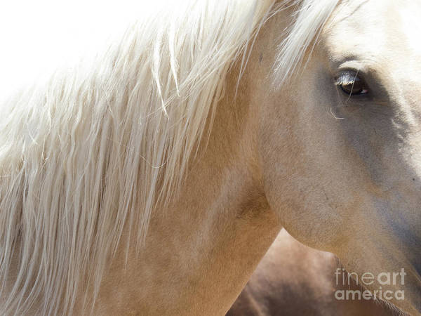 Photograph - Palomino Horse 5 by Christy Garavetto