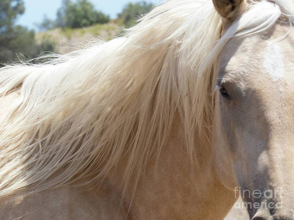 Photograph - Palomino Horse 6 by Christy Garavetto