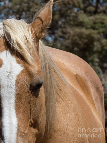 Photograph - Palomino Horse 9 by Christy Garavetto