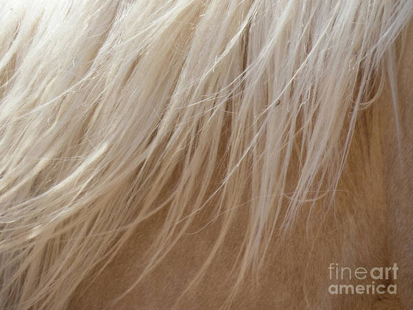 Photograph - Palomino Horse Mane Flowing by Christy Garavetto