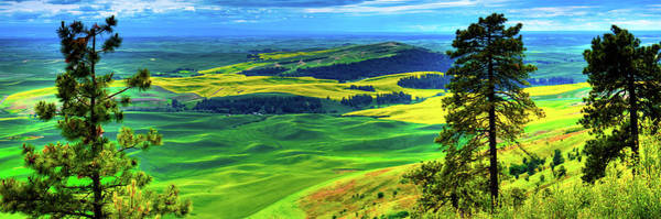 Photograph - Palouse Hills Canola And Wheat by David Patterson