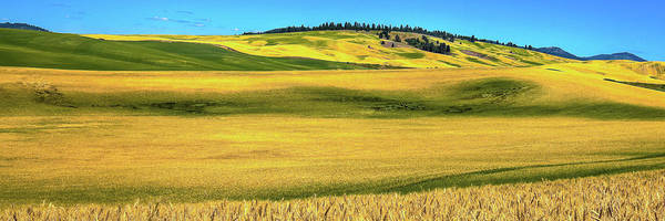 Photograph - Palouse Panorama 1 by David Patterson