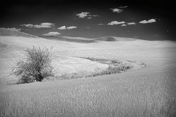 Photograph - Palouse Tree II by Jon Glaser