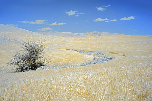 Wall Art - Photograph - Palouse Tree by Jon Glaser