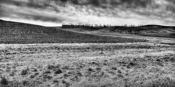 Photograph - Palouse Treeline by David Patterson