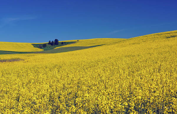 Photograph - Palouse Yellow by Leland D Howard