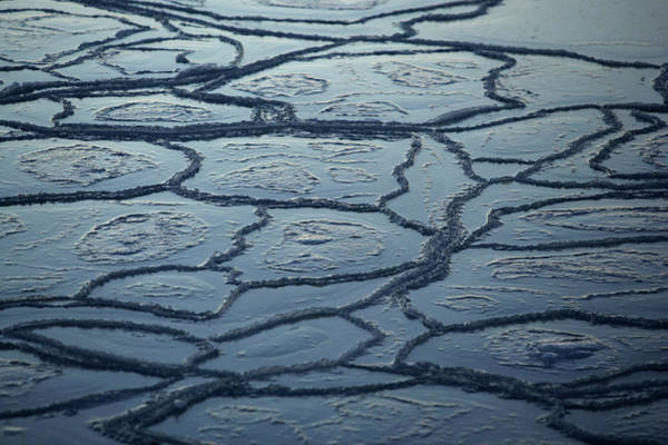 Ice Floe Photograph - Pancake Ice by Arctic-images
