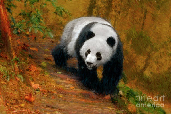 Photograph - Panda Bear Stroll by Blake Richards