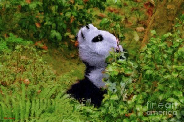 Photograph - Panda Bear Whats Up There by Blake Richards