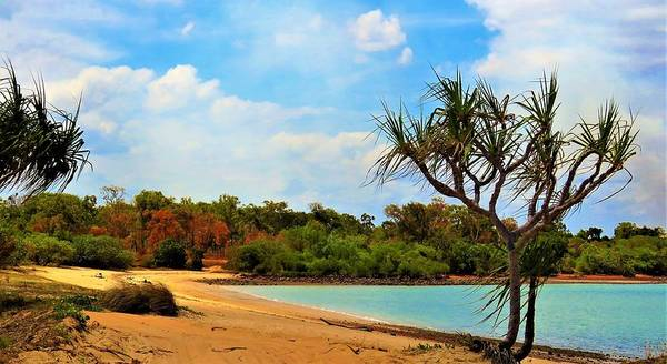 Photograph - Pandanus On Gongbung Beach by Joan Stratton