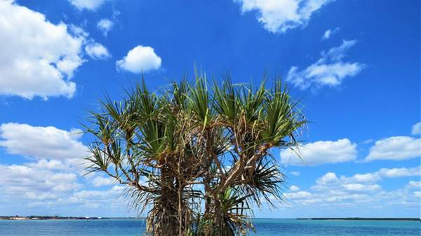 Photograph - Pandanus Palm On The Embley by Joan Stratton