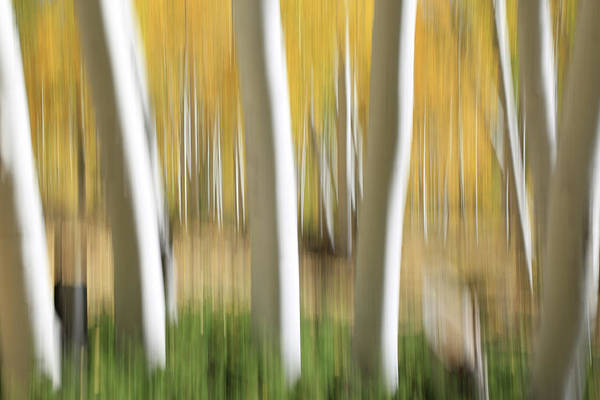 Wall Art - Photograph - Pando Abstract 2 by Donna Kennedy