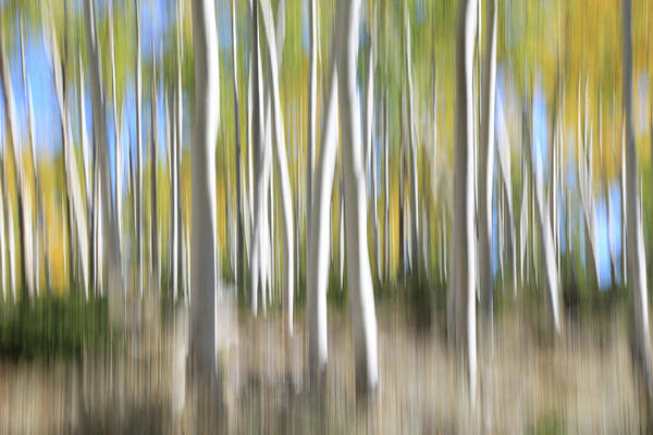 Wall Art - Photograph - Pando Abstract 5 by Donna Kennedy