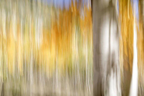 Photograph - Pando Abstract 4 by Donna Kennedy