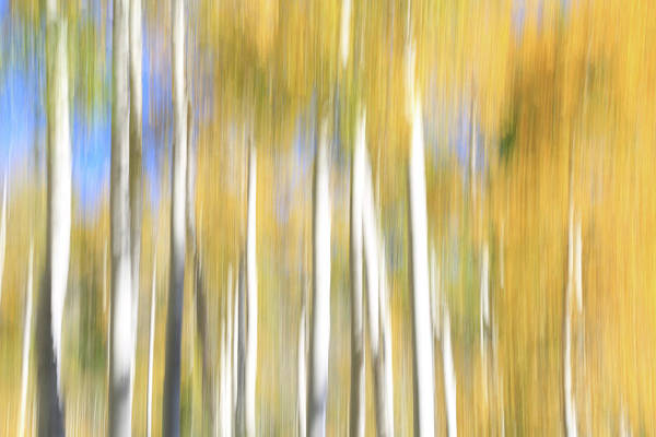 Wall Art - Photograph - Pando Abstract by Donna Kennedy