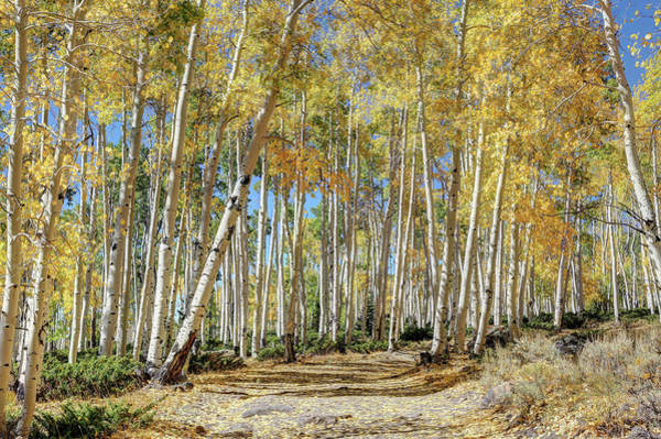 Wall Art - Photograph - Pando Miracle by Donna Kennedy