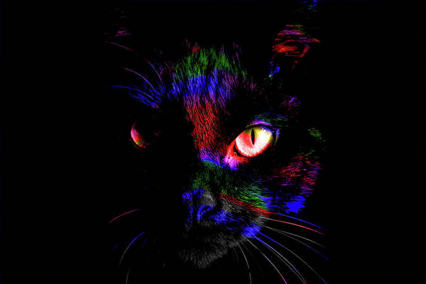 Samantha Painting - Pandora Spocks Black Cat Number 3a by Ben Stein