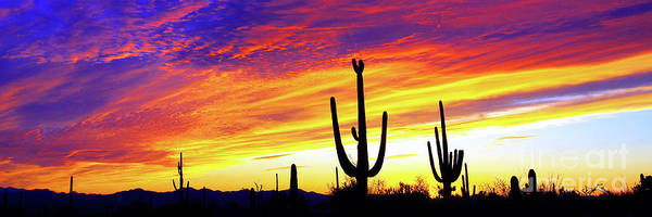 Wall Art - Photograph - Panoramic Desert Sunset by Douglas Taylor