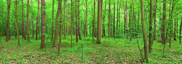 Wall Art - Photograph - Panoramic View Of Deep Forest 24mpix by Hadynyah