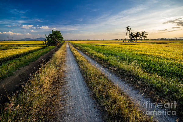 Wall Art - Photograph - Panoramic View Of Paddy View During by Rizal Zawawi