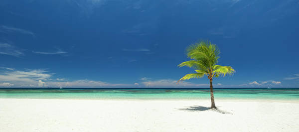 Roatan Photograph - Panoramic View Of Single Palm Tree On by Dstephens