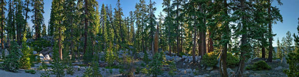 Tioga Photograph - Panoramic View Of Trees Along Tioga by Apostrophe Productions