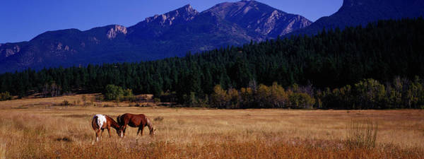 Wall Art - Photograph - Panoramic Wild Horses And Mountain Range by Jason v