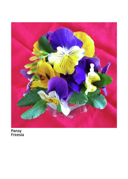 Photograph - Pansy, Freesia by Betsy Derrick