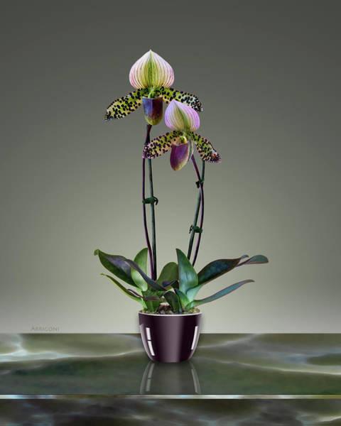 Painting - Paphiopedilum Slipper Orchids In Pot by David Arrigoni