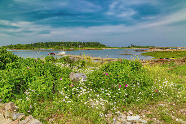 Goats Photograph - Paradise In Maine by Betsy Knapp
