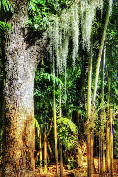 Wall Art - Photograph - Paradise In The Forest by Kathi Isserman