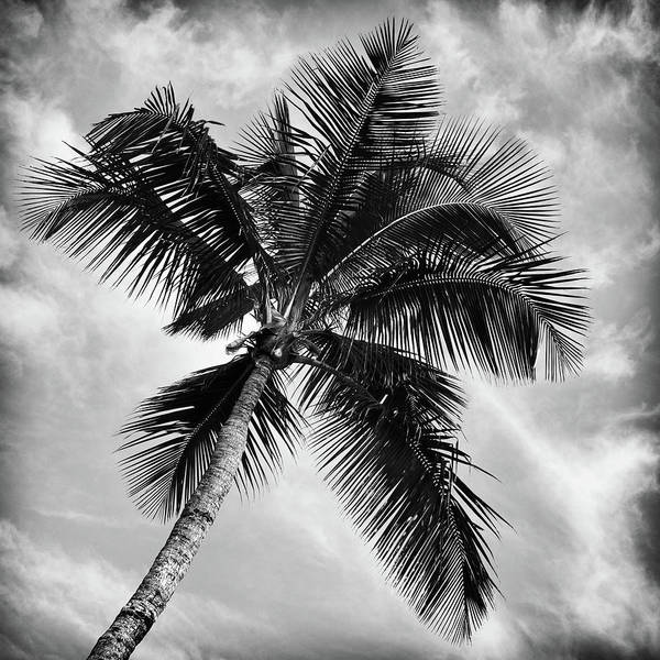 Wall Art - Photograph - Paradise Palm #2 by Stephen Stookey