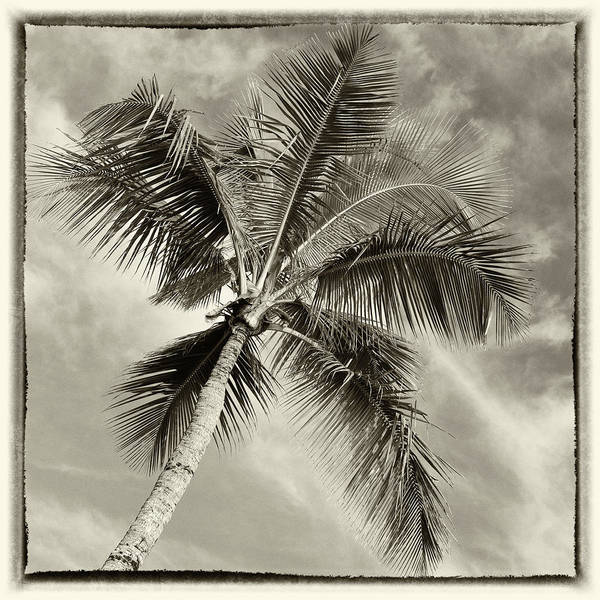 Wall Art - Photograph - Paradise Palm #3 by Stephen Stookey