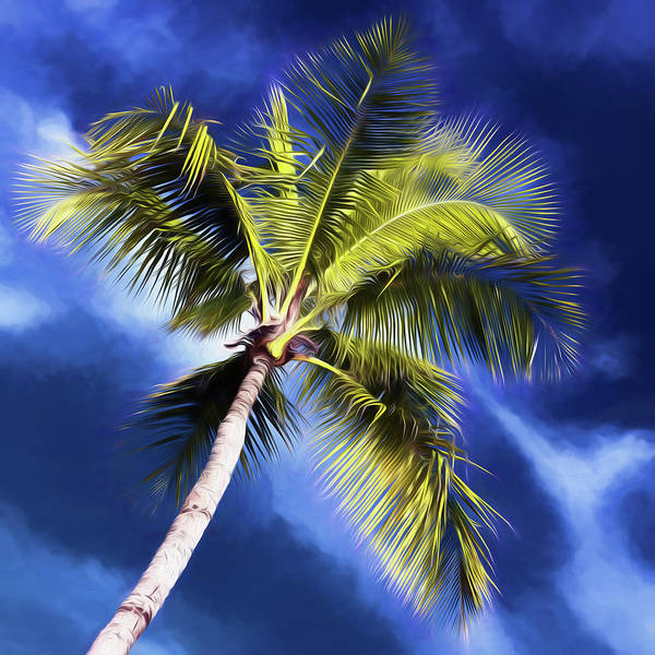Wall Art - Photograph - Paradise Palm #4 by Stephen Stookey