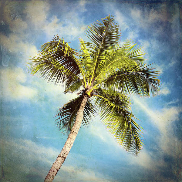 Wall Art - Photograph - Palm Paradise #3 by Stephen Stookey