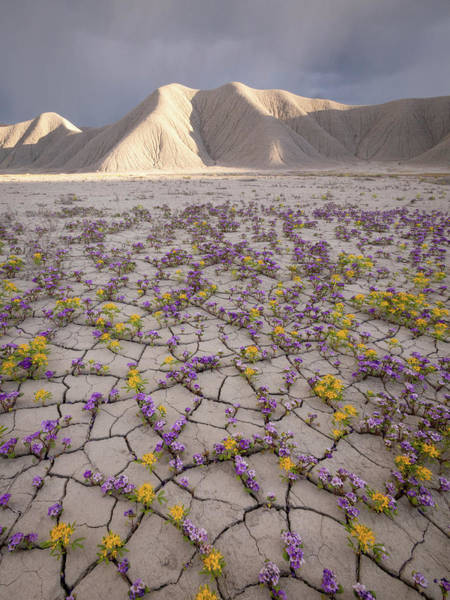 Photograph - Parched Earth by Emily Dickey