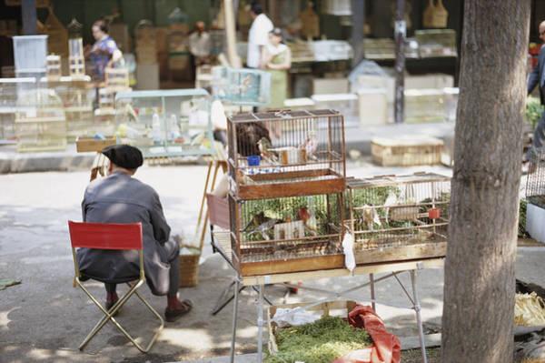Birdcage Photograph - Paris Bird Market by Frederic Lewis
