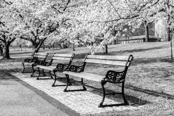 Photograph - Park Benches by Anthony Sacco