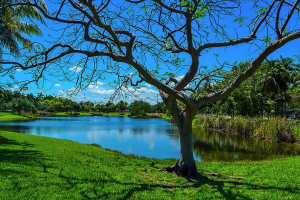 Photograph - Park Series 0040 by Carlos Diaz