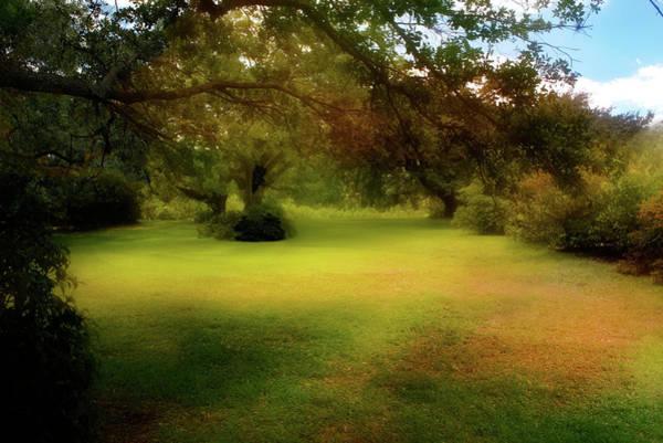 Photograph - Park Series 0258 by Carlos Diaz