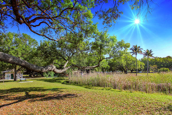 Photograph - Sunny Day In The Park by Carlos Diaz