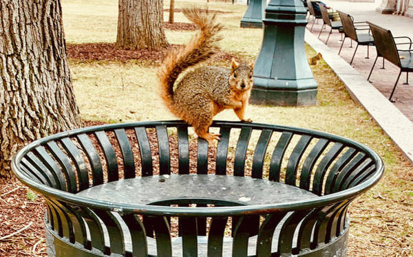 Photograph - Park Squirrels by Marilyn Hunt