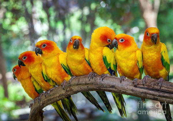 Colourful Wall Art - Photograph - Parrot by Apple2499