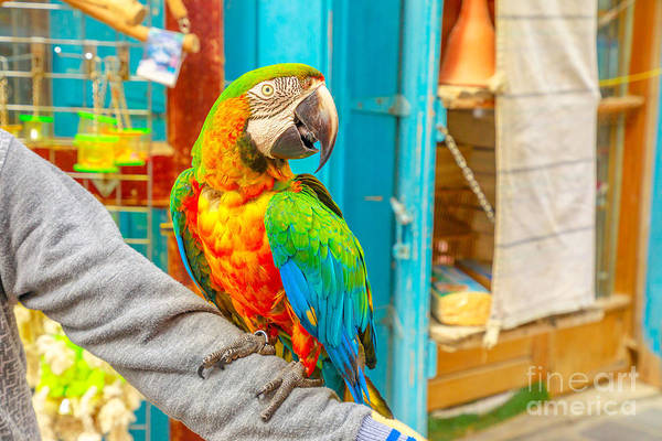 Photograph - Parrot At Bird Souq by Benny Marty