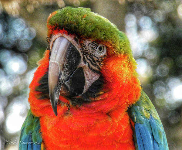 Macro Wall Art - Photograph - Parrot In Pose by Kathi Isserman